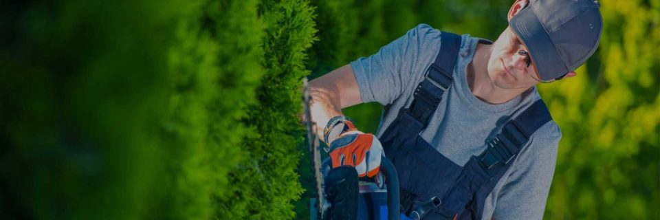 Experience in providing commercial grounds care for businesses